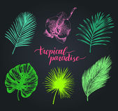 Vector vintage palm leaves illustration. Tropic paradise lettering with hand drawn collection of jungle foliage, flower. Royalty Free Stock Photography