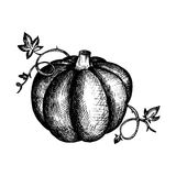 Vector vintage pumpkin and leaves Royalty Free Stock Photography