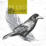 Vector vintage raven. Hand drawn illustration Stock Images