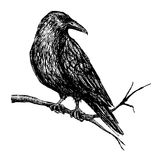 Vector vintage raven. Hand drawn illustration Royalty Free Stock Photos