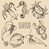 Vector vintage seafood sketches collection. Hand drawn fish illustrations for restaurant, cafe menu, market ad. Stock Photos