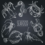 Vector vintage seafood sketches collection. Hand drawn fish illustrations for restaurant, cafe menu, market ad. Stock Image