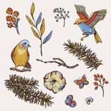 Vector vintage set of floral natural elements, birds, fir branches, cotton, flowers and butterflies vector illustration