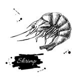 Vector vintage shrimp drawing. Hand drawn monochrome seafood ill. Ustration. Great for menu, poster or label Stock Images