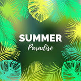 Vector vintage summer paradise illustration. Exotic palm leaves background. Hand sketched jungle foliage poster. Color tropic plants frame Stock Photography