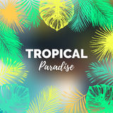 Vector vintage tropical paradise illustration. Exotic palm leaves background. Hand sketched jungle foliage poster. Color tropic plants frame Stock Photography
