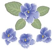 Vector violet flowers. Foure vector violet flowers with leaves Royalty Free Stock Photo