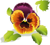 Vector violet and yellow flower Stock Photo