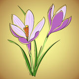Vector violette krokus Royalty-vrije Stock Afbeelding