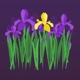 Vector violette und gelbe Iris auf dunklem Nachtsteigungshintergrund Blumenmuster für Einladung, Grußkarte, Hochzeit, Geburtstag, Stockbilder