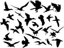 Vector vliegende vogels Stock Foto