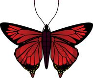 Vector vlinder royalty-vrije illustratie
