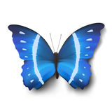 Vector vlinderillustratie royalty-vrije illustratie
