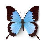 Vector vlinderillustratie stock illustratie
