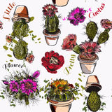 Vector wallpaper pattern with hand drawn cactuses in watercolor Royalty Free Stock Photo