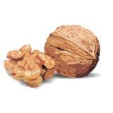 Vector walnuts ,hand drawn vector illustration Stock Image