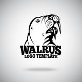 Vector Walrus logo template for sport teams, business etc Royalty Free Stock Images