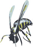 Vector wasp Royalty Free Stock Photography