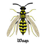 Vector Wasp Illustration. Isolated on white Stock Photos
