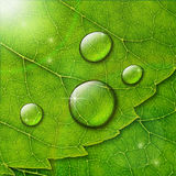 Vector water drops with  flare and bokeh on green leaf macro bac Royalty Free Stock Photos