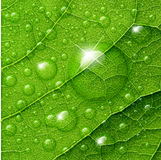 Vector water drops on green leaf. Macro background Stock Photos