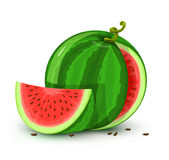 Vector water melon fruit isolated on white Royalty Free Stock Photography