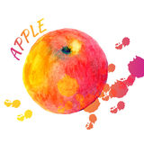 Vector watercolor apple of color splashes on white background. Isolated fruit illustration Stock Photos