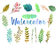 Vector watercolor aquarelle branches and leaves. Stock Images