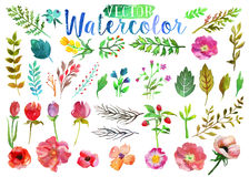 Vector watercolor aquarelle flowers and leaves. Stock Photo