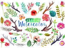 Vector watercolor aquarelle flowers and leaves. Vector watercolor hand drawn colorful flowers, leaves and horns. The art paint on white background Royalty Free Stock Photos