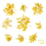 Vector watercolor autumn leaves maple leaf flora Royalty Free Stock Image