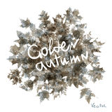 Vector watercolor autumn leaves maple leaf flora Stock Photography