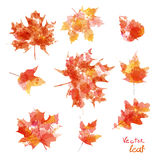 Vector watercolor autumn leaves maple leaf flora Stock Images