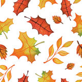 Vector Watercolor autumn Leaves seamless pattern. Royalty Free Stock Images