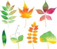 Vector watercolor autumn leaves set vector illustration