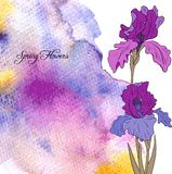 Vector watercolor background with irises Stock Photo