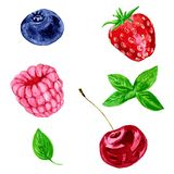 Vector watercolor berries. Set of different berries, raspberry,cherry,blueberry, strawberry and leaves of mint,drawing by watercolor,hand drawn vector stock illustration
