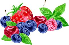 Vector watercolor berries Stock Images