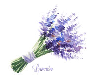 Vector watercolor bouquet of lavender Royalty Free Stock Images