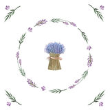 Vector watercolor bouquet of lavender. Royalty Free Stock Photography