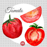 Vector watercolor with bright red tomato and Royalty Free Stock Photos