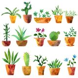 Vector watercolor drawing home plants. Vector watercolor drawing house plants, cacti and succulents, hand drawn illustration Stock Photography