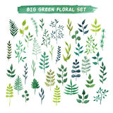 Vector watercolor floral set. Big green floral collection. Royalty Free Stock Image