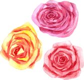 Vector watercolor floral set Stock Photography