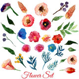 Vector  watercolor flowers with green leaves. Modern elements for your design. Can be used in posters, invitations, banners. Royalty Free Stock Image