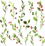 Vector watercolor green branches with berries Royalty Free Stock Image