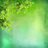 Vector Watercolor Green Leaves Background Stock Photography