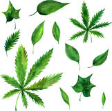 Vector watercolor green leaves Stock Image
