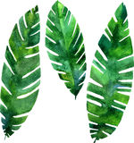 Vector watercolor green leaves Royalty Free Stock Photo
