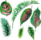 Vector watercolor green leaves Stock Photography